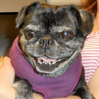 10 year old Zoey after bladder stone removal surgery