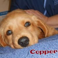 Cooper the puppy and Johni