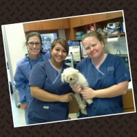 Dr.Alkofer, shelter spay, Cathy, and Robyn