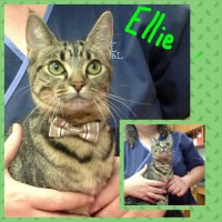 Ellie (a.k.a CVS Kitty rescue)