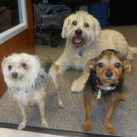 Here comes trouble - Dr. E's dogs are in for a visit
