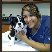 Stella the adorable English Bulldog puppy and Cathy