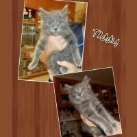 Teddy the kitty