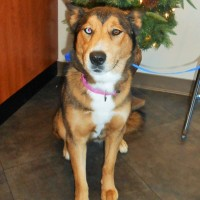 Vixen - a very sweet rescue !